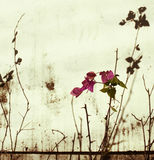 Pink bougainvillea on bleached wall. Pink bougainvillea, branches and shadow on bleached wall background stock photo