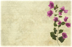 Pink bougainvillea branch on pale ribbed parchment Royalty Free Stock Image