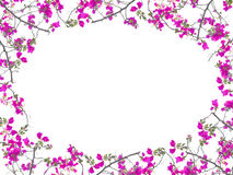 Pink Bougainvillea flower frame oval shape Royalty Free Stock Images