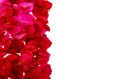 Pink bougainvillea petals isolated . Royalty Free Stock Photo