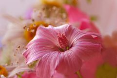 Pink bouquet. Soft pink mallow flower (of the genus Malva) in a bouquet Royalty Free Stock Image
