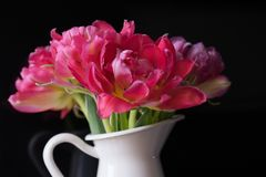 Pink bouquet flowers white vase black background tulips. Tulip pink flower closeup white vase black background spring still-life beautiful flower stock photography