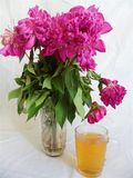 Pink bouquet of wilted peony flowers and a cup of green tea.  royalty free stock photo
