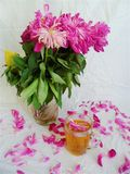 Pink bouquet of wilted peony flowers and a cup of green tea.  stock photo