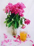 Pink bouquet of wilted peony flowers and a cup of green tea.  stock photography