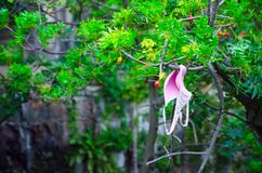 Pink bra hanging on branch of tree in a garden. stock images