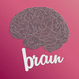 Pink brain Royalty Free Stock Photo