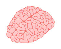 Pink brain vertical view Royalty Free Stock Images