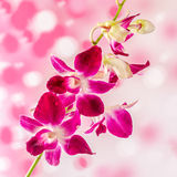 Pink branch orchid  flowers, Orchidaceae, Phalaenopsis known as the Moth Orchid, abbreviated Phal. Pink bokeh light background. Stock Photos