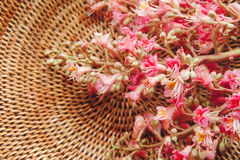 The Pink  Branche of Chestnut Tree in the Braided Basket,Selective Focus,Background.Toned Royalty Free Stock Photos