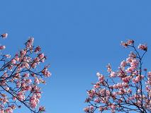 Pink branches Stock Images