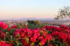 Pink Bright Flowers overlooking landscape Stock Photography
