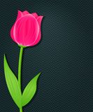 Pink Bright Tulip on Dark Black Background. Place for Text Stock Images