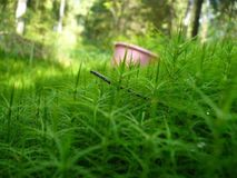 Pink bucket on green grass stock photo