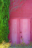 Pink building, doors and plant Royalty Free Stock Photo