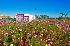 The pink building and flowers Stock Photos