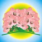 Pink bunch Stock Photo