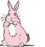 Pink rabbit Stock Images