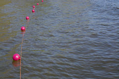 Pink buoys on lake water Stock Photography