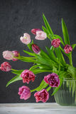 Pink and Burgundy Tulips in a vase with water. Royalty Free Stock Images
