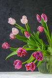 Pink and Burgundy Tulips in a vase with water. Stock Photography