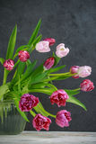 Pink and Burgundy Tulips in a vase with water. Royalty Free Stock Image
