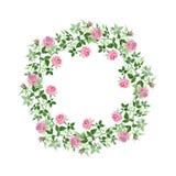 Pink bush roses floral botanical flowers. Watercolor background illustration set. Frame border ornament square. Pink bush roses floral botanical flowers. Wild vector illustration