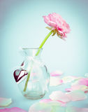 Pink buttercups in glass vase with  heart, love card Royalty Free Stock Images