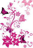 Pink butterflies on flowers on white Royalty Free Stock Image