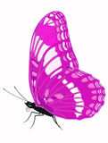 Pink butterfly. A pink butterfly on the white background Royalty Free Stock Images