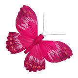 Pink butterfly royalty free stock photos