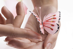 The pink butterfly royalty free stock photo