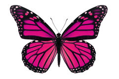Pink Butterfly Stock Photos