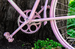 Pink Bycycle resting on a Tree Stock Photos