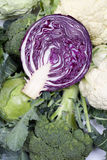 Pink cabbage Royalty Free Stock Photo