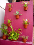Pink Cactus Wall Stock Photos
