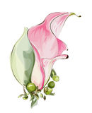 Pink Calla. Royalty Free Stock Photo
