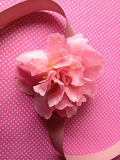 Pink camellia on polka dots with ribbon Royalty Free Stock Photos