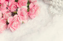 Pink canation Flower Background with place for text Royalty Free Stock Images