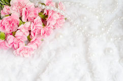 Pink canation Flower Background with place for text Royalty Free Stock Photo