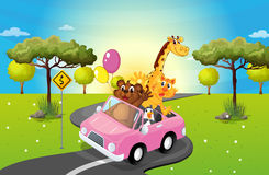 A pink car travelling with animals Royalty Free Stock Photography