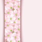 Pink card with apple flowers. Stock Image