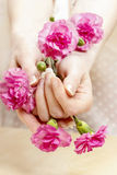 Pink carnation in beautiful hands Stock Images