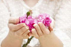 Pink carnation in beautiful hands Royalty Free Stock Photo