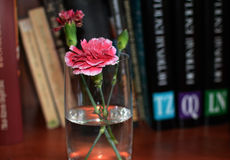 Pink Carnation on a Book Shelf. A pink carnation in a transparent glass of water placed on a brown shelf with black cover books Royalty Free Stock Photos