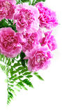 Pink carnation bouquet Stock Photo