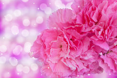 Pink carnation Stock Photography