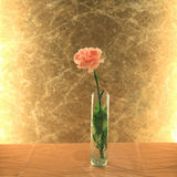 Pink carnation flower with golden background Royalty Free Stock Images