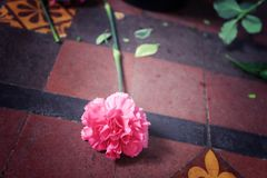 Pink carnation flower lie on the floor, process as vintage style image for symbol of abandoned or forsaken royalty free stock photography