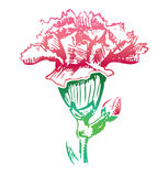 Pink carnation flower sketch icon Royalty Free Stock Photo
